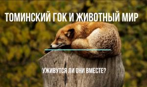 Томинский ГОК и движение СТОП-ГОК. Сравниваем аргументы